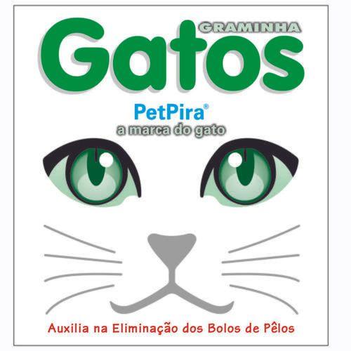 Graminha PetPira para Gatos