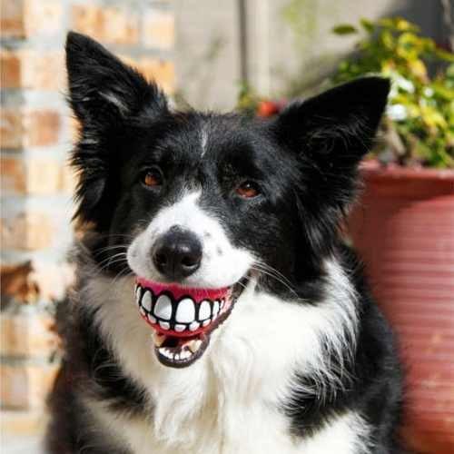 Bolinha Sorriso Dente Cães Brinquedo Vinil Com Apito - Pet Import